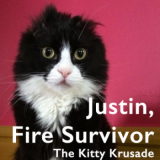 The Kitty Krusade